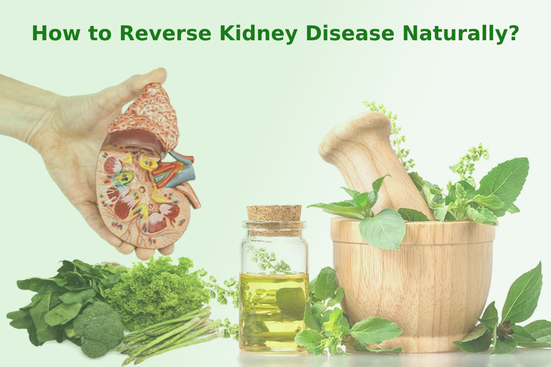 How to Reverse Kidney Disease Naturally?