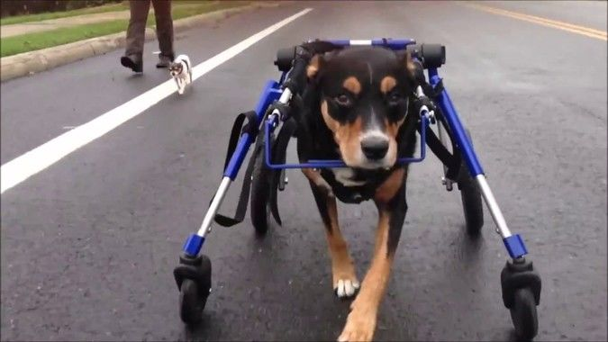 Dog Wheelchairs – Some Basic Information