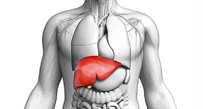 Liver Cancer Treatment in India - Healing Touristry