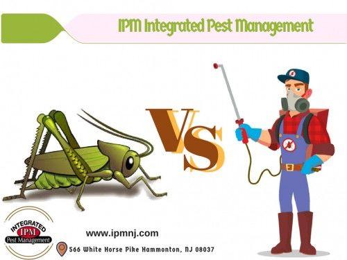 Termite Pest Control Camden County - ImgPaste.net