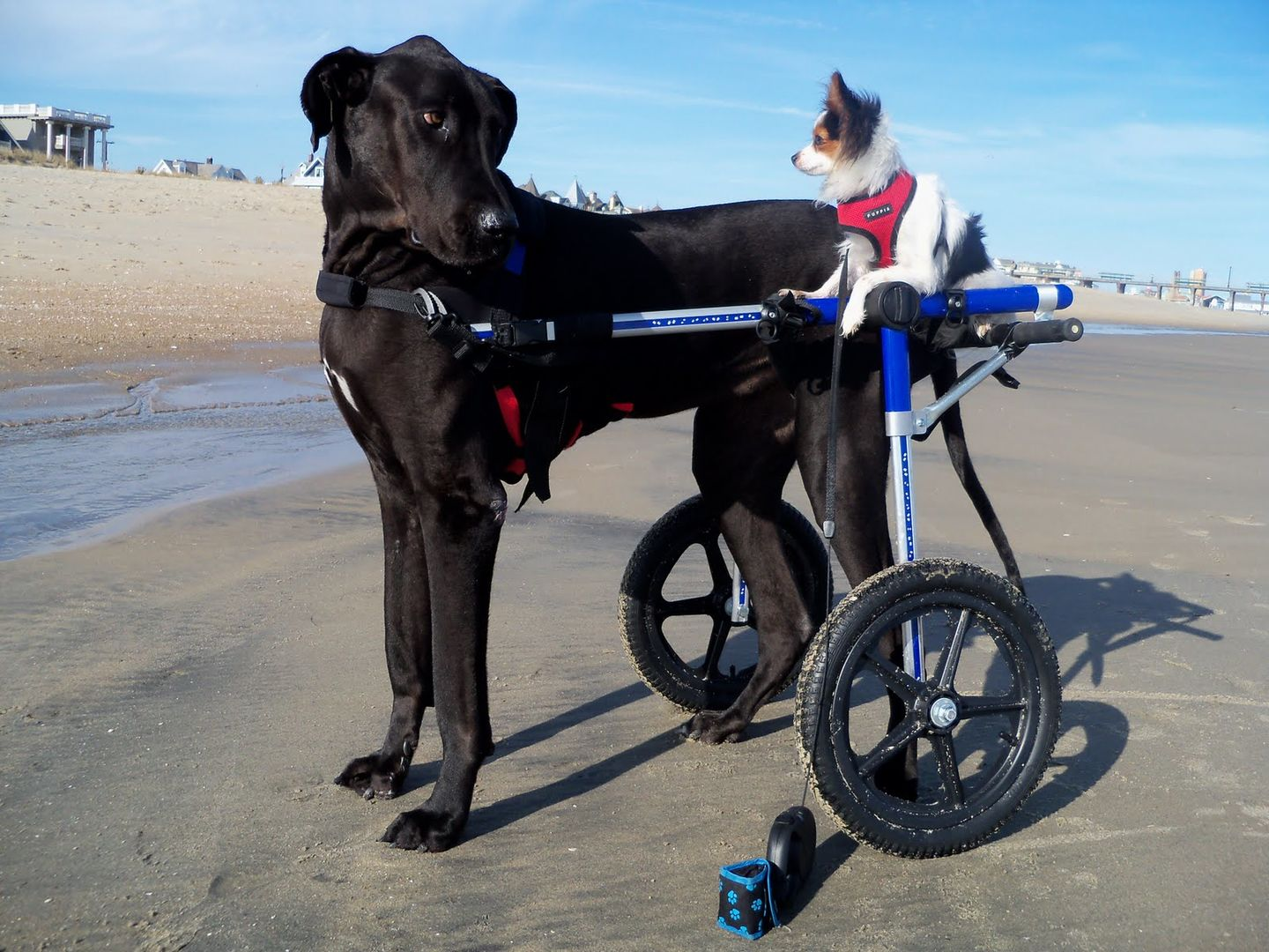 A Dog Wheelchair