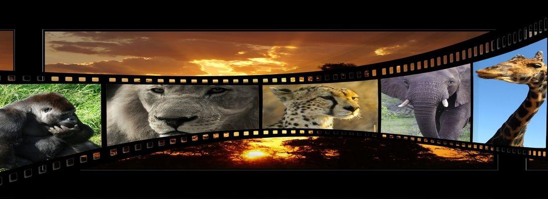 Digital Signage Solutions, Video Distribution and Presentation