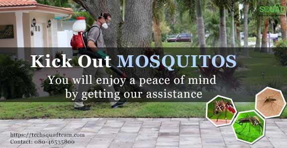 A complete solution to eradicate mosquitoes