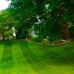 Lawn Care Services Near Me