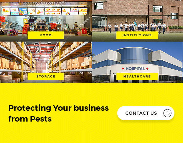 Pest Control Service for industrial premises zone