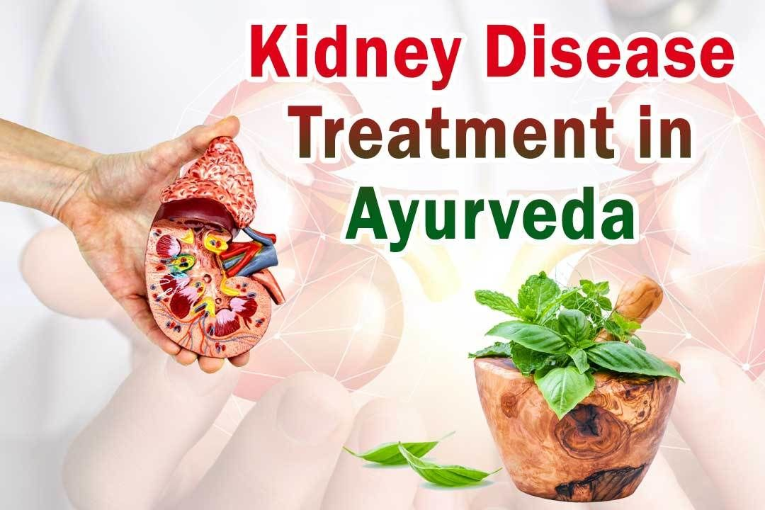 Kidney Treatment in Ayurveda – A Prevention for Failure - kidney treatment in ayurveda