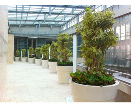 Luwasa The Best Plants Hire Melbourne Talking About Plants And Decorating Ideas - FREE Press Release