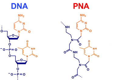 Peptide Nucleic Acid Synthesis