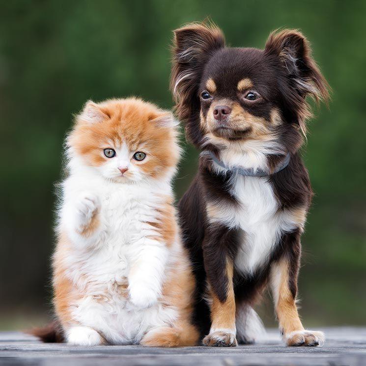 mascotas adopcion