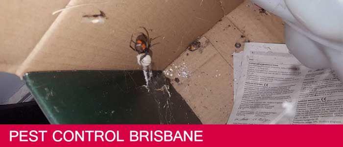 Pest Control Brisbane | 1800 339 712 | Local Pest Controller