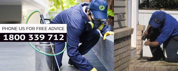 Pest Control Ipswich | Call @1800 339 712 | Guaranteed Pest Removal
