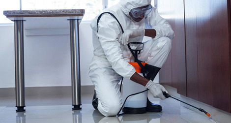 Deal With the Pest in Your Property in South Jersey with Professionals – Pest Management Services