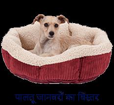 Pet Shop in Vijay Nagar | The Naughty Dogs | Healserv