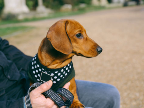 Which Small Dog Harness For Your Puppy?