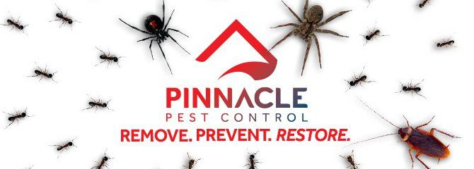 Termite Control Walnut Creek