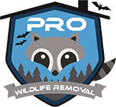 An Introduction To Animal Removal Services
