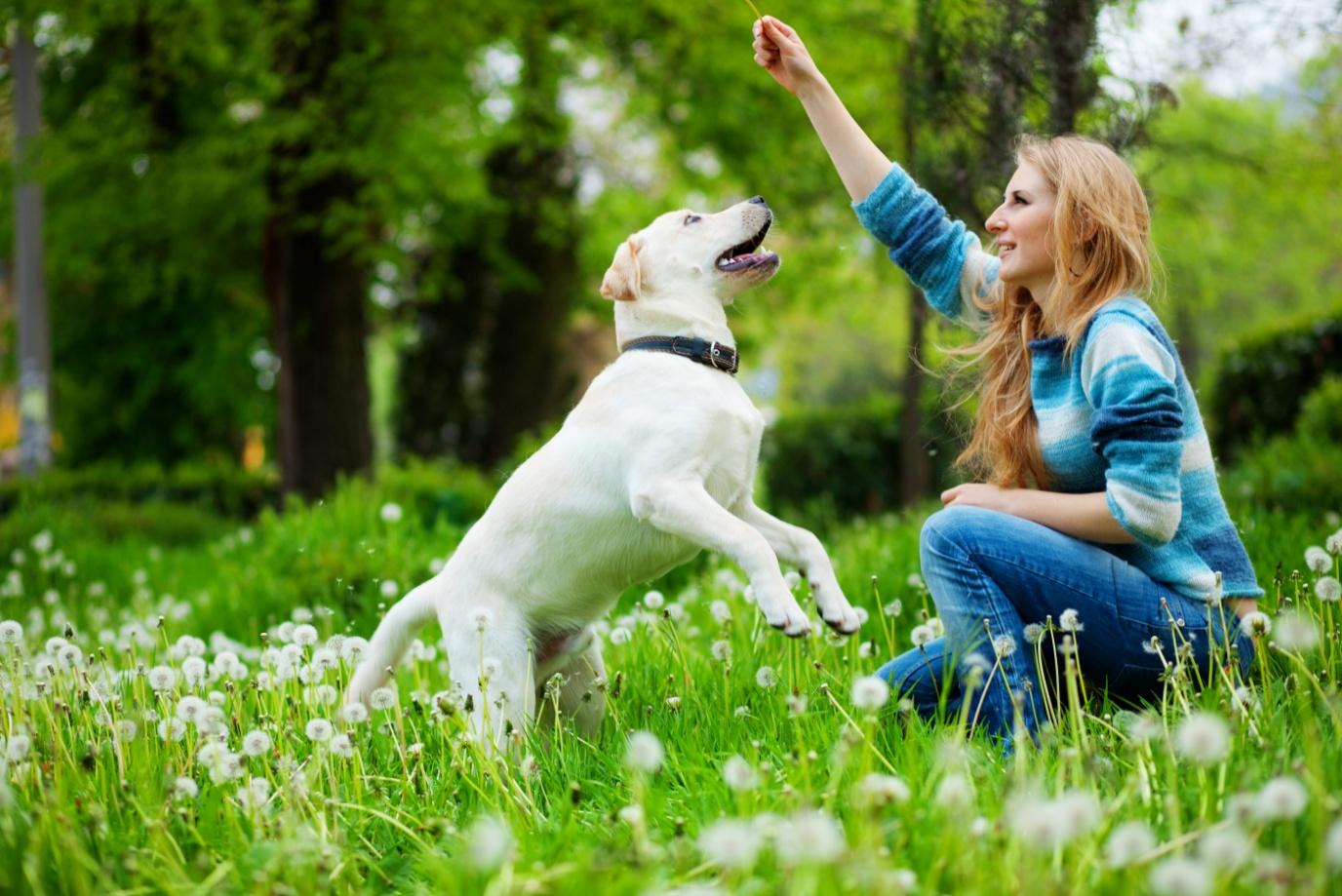 Points to Remember before Starting a Dog Daycare Business