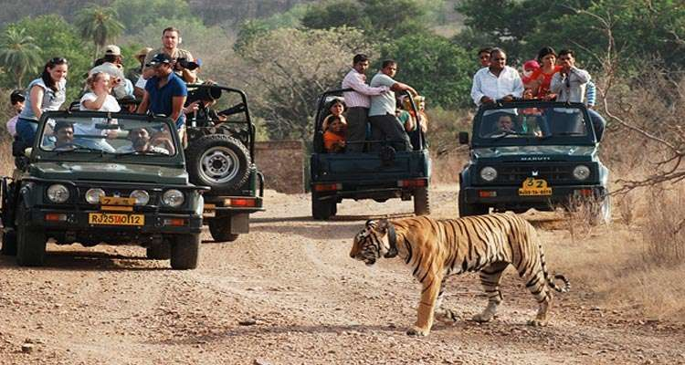 Ranthambore Tour Package From Jaipur @ Lowest Cost | Book Now