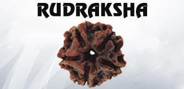 Buy Rudraksha on Rashi Ratan Jaipur