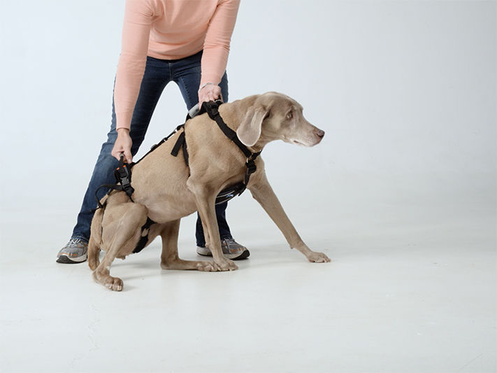 Various Types Of Dog Harness
