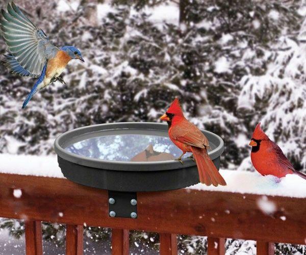 Wild Bird Supplies to Attract More Birds   Get Bird Feeders