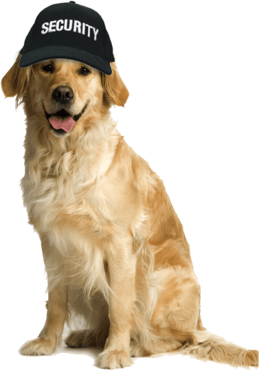 Dog Security Services, Security Dogs, Security Dog Patrol-Petsfolio