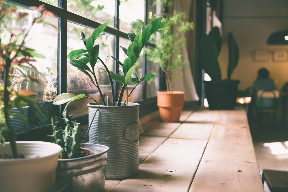 Guide to take Insta worthy shots of your Indoor Plants