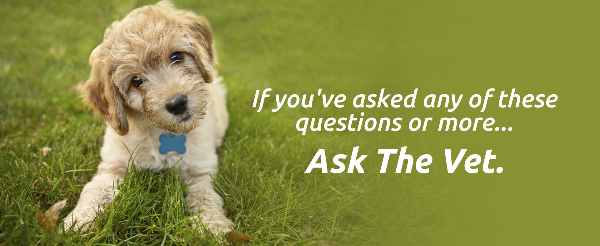 Home Veterinary Service for any type of consultation and vaccinations call at +1 866-880-7443