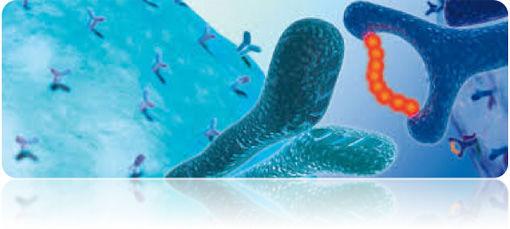 Special Antigen Peptides Services - Creative Peptides