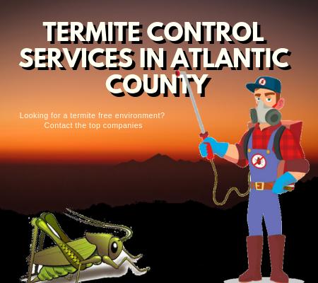 How to Control the Destructive Termites? – Pest Management Services