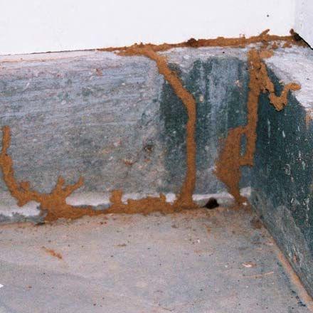 Best Pest Control | Termite Control | Rats Control | Thrissur