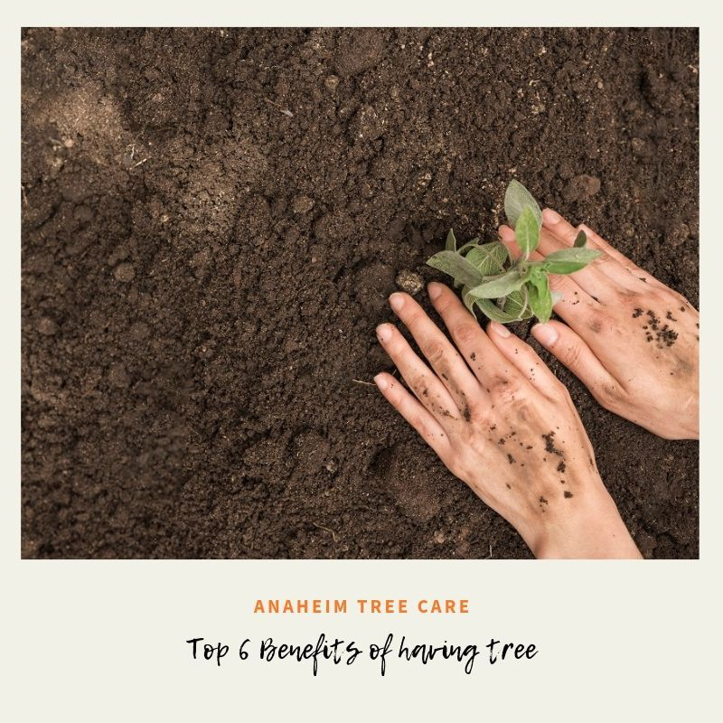 Top 6 Benefits of planting trees