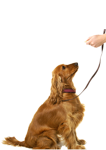 Dog Training Services | Pet Training Services | Dog Trainers - Petsfolio