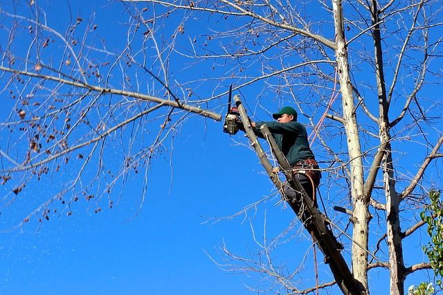 Mature tree pruning service Killara