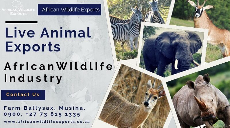 Legal wildlife Live Animals exports South Africa