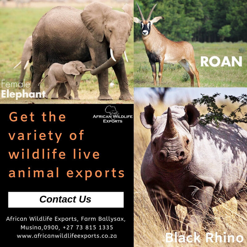 Wildlife live animal exports South Africa
