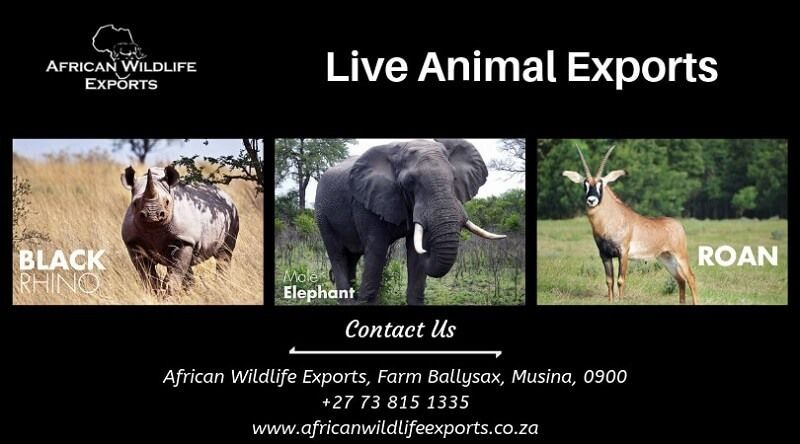 African Wildlife Exports — Get the South African wildlife live animal...