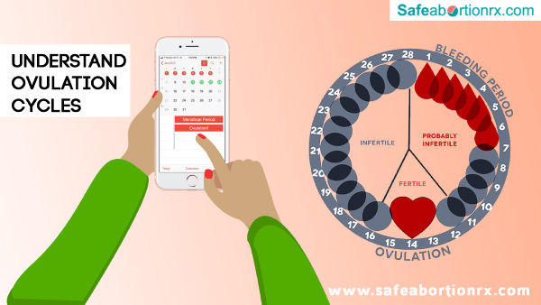 What is Ovulation Understanding Ovulation Period Cycles - safeabortionrx blog