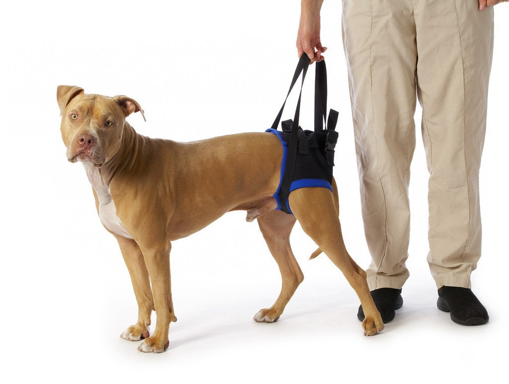 Dog Rear Lift Harness For Handicapped Dog