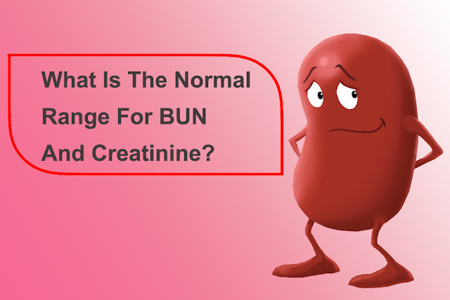 What is the normal range for BUN and Creatinine?