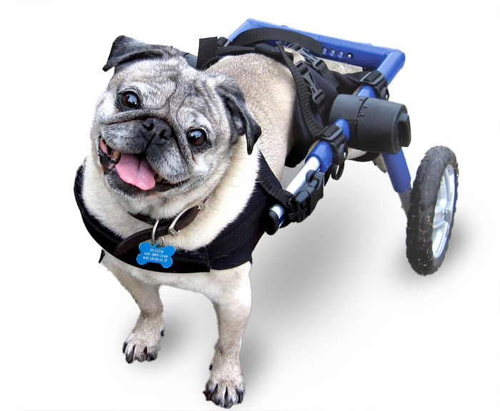 A Dog Wheelchair- When Your Best Friend Needs A Best Friend