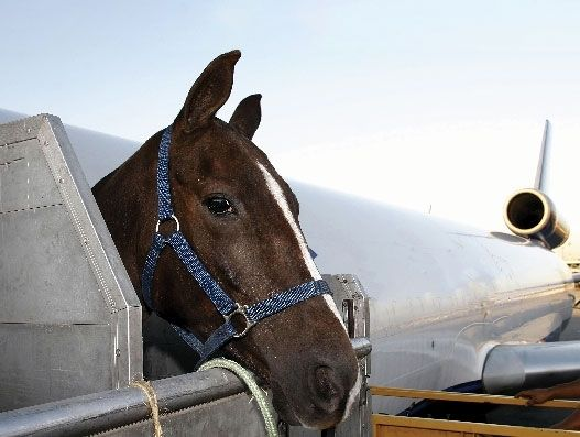 FROM MAGAZINE: When animals call the shots | Air Cargo