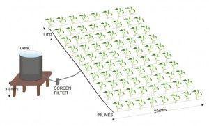 Introducing Drip Irrigation Kits | Ecoflo Irrigation