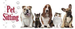 Pet Sitting in Chennai, Hyderabad | Dog Baby Sitter In Chennai