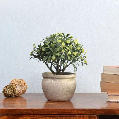 Decor your walls of your home with wall planters