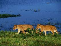 25 Surprising Facts About botswana tourism itinerary