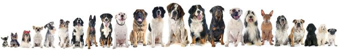 Best Dog Boarding in Hyderabad, Chennai   The Pet Care Clinic