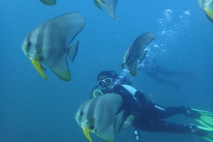Thrilling Scuba Diving in Andaman & Nicobar Islands