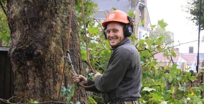 Tree Surgeons Southend