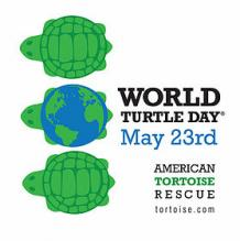 Rescue Turtles
